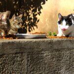 Kedi Sahiplenme 'nin önemi (ÜCRETSİZ KEDİ SAHİPLENME)