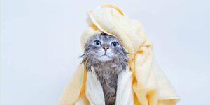 kediler yıkanır mı?